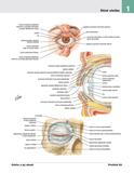 Netterov anatomický atlas človeka 6. vydanie