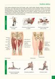 Atlas svalů - anatomie Pro studenty, fyzioterapeuty, sportovce, tanečníky, trenéry