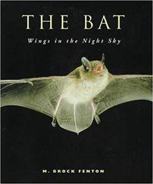 Bat Wings In the Night Sky